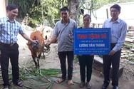 Giáo viên huyện Kỳ Sơn chật vật vì phải nộp tiền mua bò giúp hộ thoát nghèo