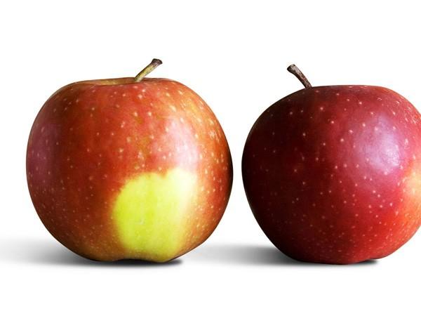 Chuyên gia trái cây chia sẻ