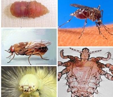 11 loại côn trùng cực kỳ nguy hiểm với con người