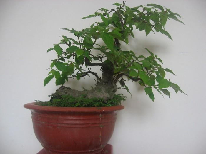 Những loại cây giúp bạn tỉnh táo, minh mẫn nơi làm việc