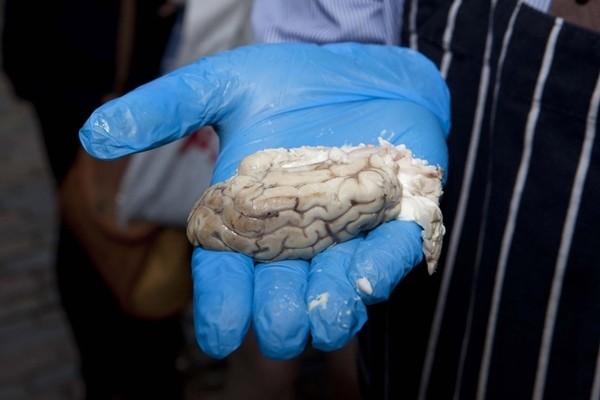Món bánh mì kẹp... não bê tăng cường chất xám