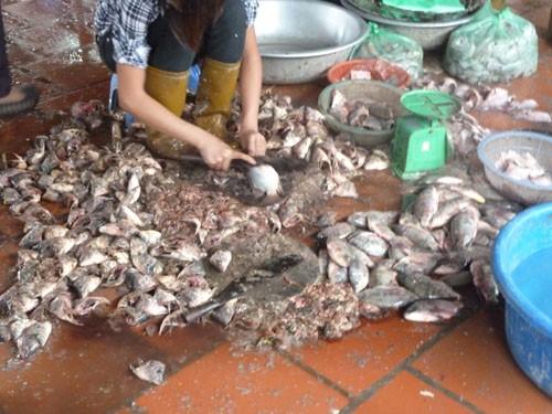 Xem những hình ảnh này, thực khách còn dám ăn bún cá ở Hà Nội?
