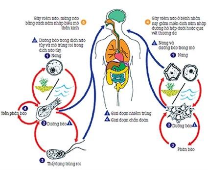 """Không thể khẳng định amip """"ăn não người"""" có trong bụi, đất..."""