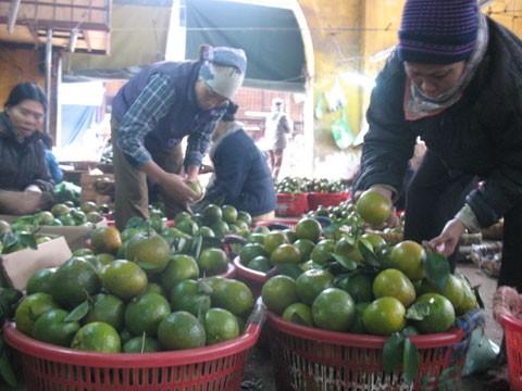 Dân Hà Giang cắn răng bán cam non để khỏi bị nghi hàng Trung Quốc