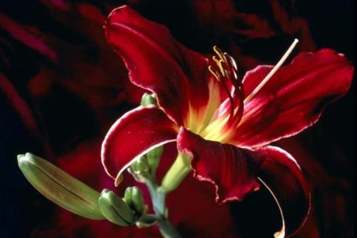 10 loài hoa