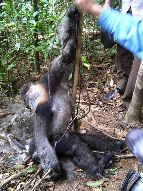 Nhà báo Đỗ Doãn Hoàng kể chuyện động vật hoang dã bị tàn sát dã man